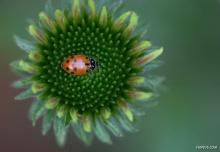 พักชมสารคดี Flowers and Insects Spectacular Photography