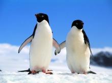 ••penguin••°•.°(o^.^o) 3