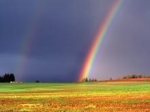 rainbow •°•.° ღ.