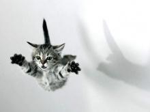 The Mischievous Kittens .•°•.° (o^.^o)