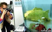 เชื่อมั้ย?? ว่าเป็นปลาทองคำของจริง