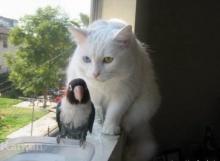 --[แมวจ้า..แมว]--