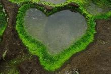 หัวใจ จากธรรมชาติ
