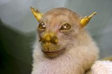 สัตว์ที่เพิ่งถูกค้นพบใน 20 ปีที่ผ่านมา