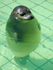 อ้วนเกินไปแล้วนะแก ลดน้ำหนักด่วน