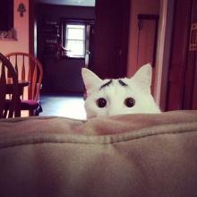 รวมภาพ แมว ลายแปลกๆ