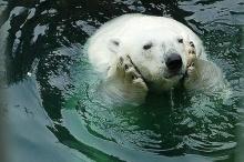 อีกมุมของ หมี กับความน่ารักที่เป็นธรรมชาติ