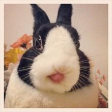กระต่ายน้อยที่น่ารัก