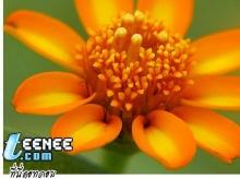 ดอก(ส้ม)สวย ๆจ้า