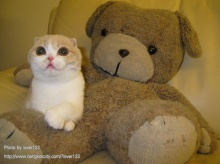 แมวอะไร ไม่มีหู..แต่ก็น่ารักนะ