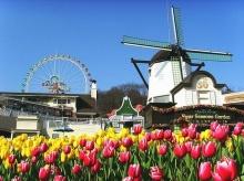 สวนดอกทิวลิปที่ Everland เกาหลีใต้