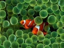 โลกของปลา