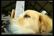 กิจกรรมยามว่างน้องหมา1