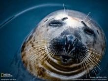 สัตว์โลกน่ารัก :))*