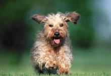 สุนัขแสนรู้หลายพันธุ์+หลายสไตล์ และคุณล่ะชอบสุนัขพันธุ์ไหน