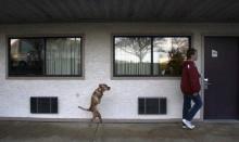 สุนัข  2  ขา