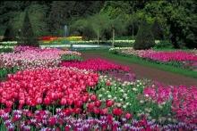 สวนดอกไม้สวย...สบายตา