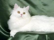 ขาว.....น่ารัก