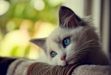 แมวเหมียว....เศร้าจัง