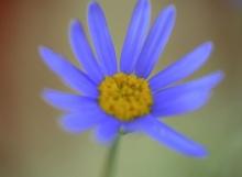 ภาพดอกไม้แบบมาโคร