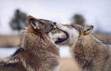 Funny animals ..(o^.^o) แก้ไขค่ะ ..