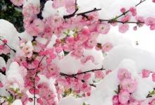 ..ดอกไม้กลางหิมะ..2 \(^.^)/