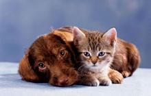 --[น้องหมา&น้องแมว-2]--