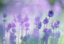 Fleur de violette ‧:﹎。‧::‧ (^∇^) 3