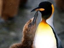 ••penguin••°•.°(o^.^o) 4