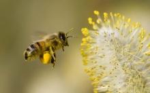 น้องผึ้งกับดอกไม้  .•°•.° ღღღ