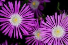 ดอกไม้แบบนี้..เคยเห็นกันยังจ๊ะ (2)
