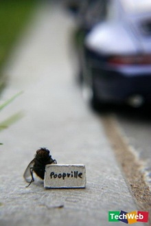 ชีวิตของเจ้าแมลงวัน