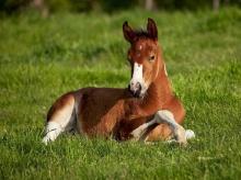 สัตว์โลกน่ารัก
