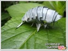 แมลงกระดาษ ( 2 )