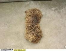อะไรเนี่ย สุนัขหรือผ้าถูพื้นเนี่ย!!!