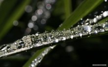 close up หยดน้ำสวย ๆ จากธรรมชาติ