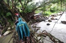 สะพานรากไม้ที่อินโดนีเซีย