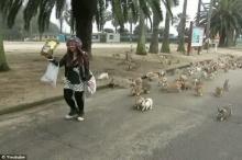 กระต่ายวิ่งไล่ตามนักท่องเที่ยวเป็นฝูง