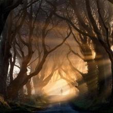 อุโมงค์ต้นไม้ สุดงดงาม
