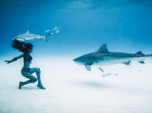 ภาพหวาดเสียว สาวเต้นรำกับปลาฉลาม
