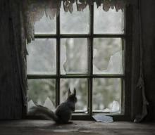 ภาพถ่ายแสนเศร้าของสัตว์น้อยริมหน้าต่าง