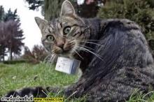 ๏~* จับแมวมาเป็นตากล้อง แล้วคุณจะได้ภาพที่ไม่เคยเห็น *~๏