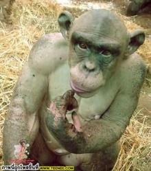 ลิงน้อยผู้น่าสงสาร