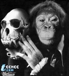 ล.ลิงจั๊กๆ(รักจิงๆ)