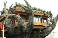 ภัตตาคารบนต้นไม้