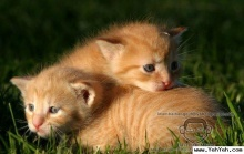 เมี๊ยว..เมี๊ยว..แมวน้อยน่ารัก