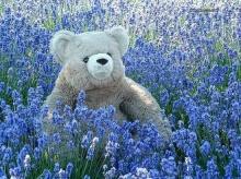 ~Teddy on Garden~