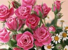 เอาดอกไม้มาฝาก # 2