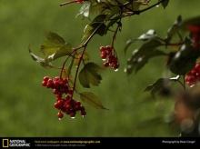 สุดยอดภาพ National Geographic (1)