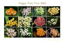 ปฏิทินดอกไม้ปี 2009 ( Calander )